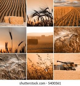 sepia harvest photos collection