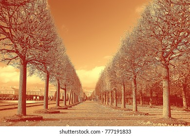 sepia. landscape in the autumn park / monochrome image of trees and alley in the city park. Black and white poster, orange landscape autumn walk  Indian summer. Warm tones of autumn  forest November