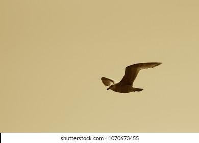 Sepia Tone Shot of lone seagull
