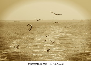 Sepia Tone Shot of Seagull flying behind boat