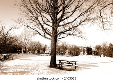 Sepia winter shot of a snow-covered picnic table and tree in a park