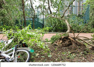 September 19, 2018, after the typhoon mangkhut in Hong Kong, big tree collapse, bicycles fall down and tree uprooting by strong wind