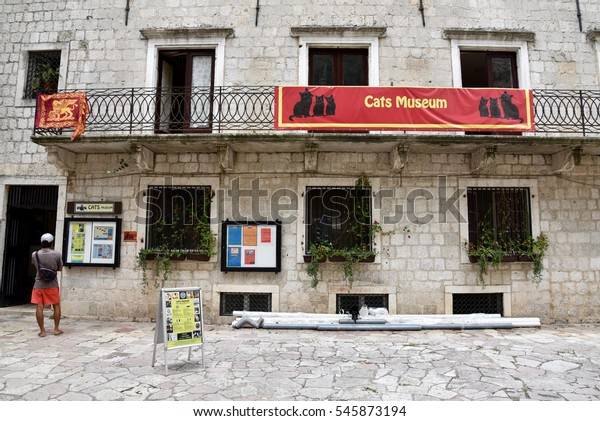 September 20, 2016. Montenegro, Kotor. Cats museum in the old town os Kotor.