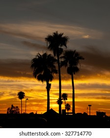 September 28, 2015 Sunset and afterglow over Tucson, Arizona, USA with the Palm Trees silhouetted against the orange sky.