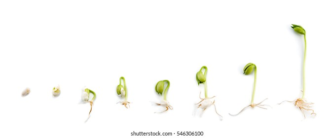 Bean Seed Images Stock Photos Vectors Shutterstock