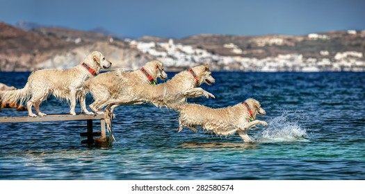 Sequence from a jump into the sea of a Golden Retriever, in Milos island, Cyclades, Greece