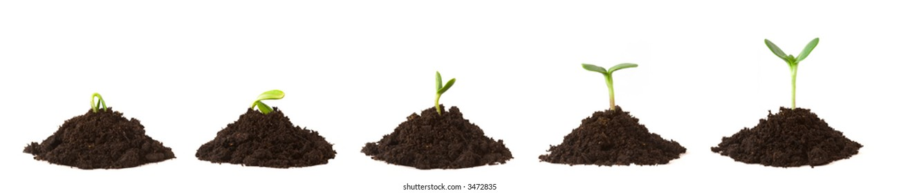 Sequence of a plant sprouting/growing on piles of dirt, white background.