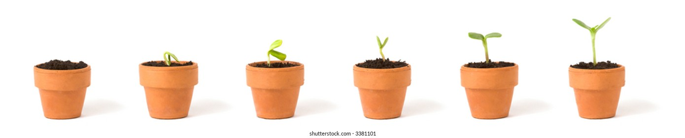 A sequence of a plant sprouting/growing in pots, on white.