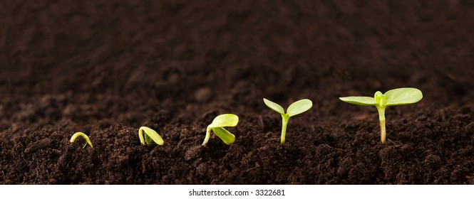 Sequence of a seedling growing in the dirt.
