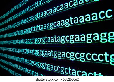 Sequencing of the genome. The sequence of nucleotide bases in the DNA molecule.