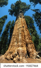 Sequoia, General Sherman