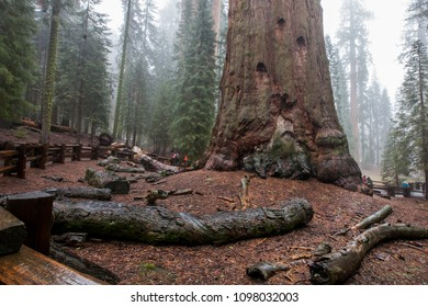 Sequoia and King's Canyon National Park - Forest full of giant Sequoia trees