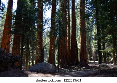 Sequoia National Park, California - August 9, 2016 : Beautiful sequoia forest trail