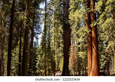 Sequoia National Park, California - August 9, 2016 : Amazing morning sunlight in Sequoia National Park in the forest