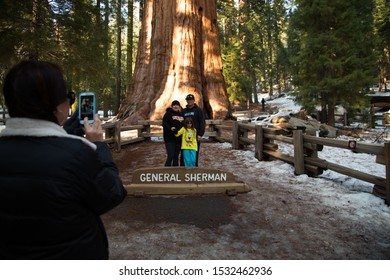 Sequoia National Park, California/USA - Feb 17 2013: Park guest visit the General Sherman tree, the world's largest tree, a giant sequoia, in Sequoia National Park.