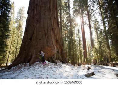 Sequoia National Park, California/USA - Feb 17 2013: Park guest visit and hug the General Sherman tree, the world's largest tree, a giant sequoia, in Sequoia National Park.