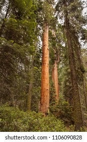 Sequoia National Park and the General Sherman Tree - World's Largest Trees