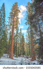 Sequoia national park and General Sherman