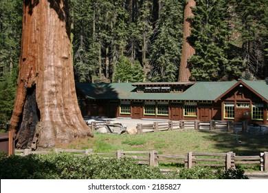 Sequoia National Park Museum