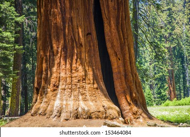 Sequoia national Park with old huge Sequoia trees like redwoods in beautiful landscape