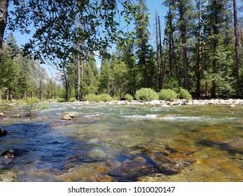 Sequoia National Park Trees River Forrest