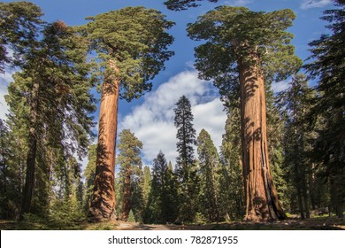 Sequoia National Park Sequoia Trees Sequoias American Nature