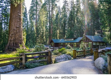 sequoia national park,california,usa:2017-05-09: giant sequoia compare with museum.