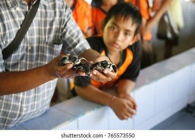 Serangan - Bali Indonesia. 9th of October 2008. School children visit turtle rehabilitation centre. More eduction about nature and environment make children aware of nature's importance.