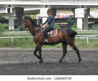 Serbia, Belgrade - June 23rd 2018 - Horseback riding training at the Belgrade Hippodrome
