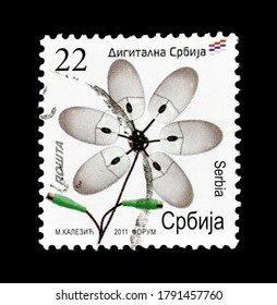 SERBIA - CIRCA 2011 : Cancelled postage stamp printed by Serbia, that shows computer mouses shaped like flower, circa 2011.