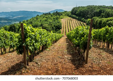 Serbian rural Landscape with wineyards and hills