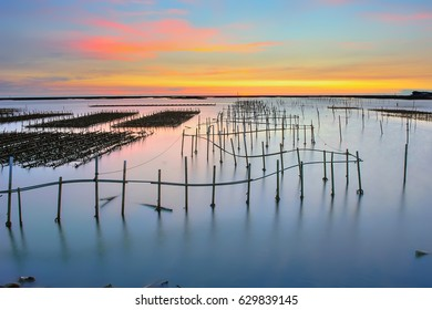 Serene and beautiful sunsets oyster fields,Taiwan.