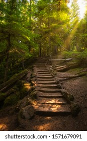Serene hiking trail with steps along the McKenzie River in Oregon