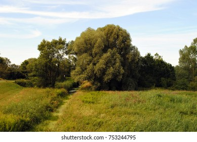 Serene landscape of beautiful summer trees and green grass with little stream leading through them. Relaxing nature view. Wallpaper. Sky with white clouds.