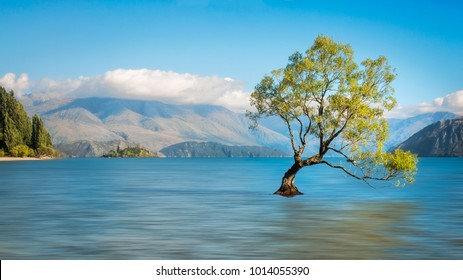 Serene morning at lake Wanaka with a symbolic willow tree just of the shore of lake. Wanaka is a popular ski and summer resort town in the Otago region of the Southern Island of New Zealand.