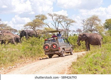 SERENGETI NATIONAL PARK/ TANZANIA - JANUARY 6, 2008: Elephant herd goes through dirt road in savanna with safari car full of people standing in way on January 6, 2008 in Serengeti National Park.