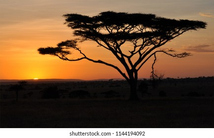 Serengeti sunset behind tree
