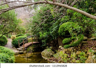 Serenity through the path and over the stream in the forest