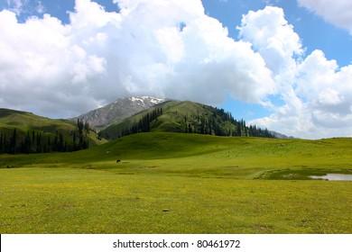 Seri Paya Landscape, Pakistan.