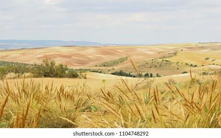 series of Castilian landscapes in Toledo, spain,wheat field in spring, landscape of Castilla La Mancha, Spain,