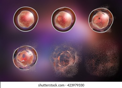 Series of images showing different stages of destruction of a cell. 3D illustration. Can be used to illustrate effect of drugs, medicines, microbes, nanoparticles, apoptosis