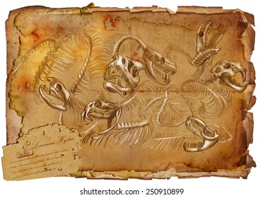 Series of legendary animals and monsters (skeleton): HYDRA. An hand drawn full sized illustration (Original). Hand drawing on old vintage paper with text. Background: slightly blurry, Lines: sharp.