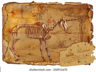 Series of legendary animals and monsters (skeleton): UNICORN. An hand drawn full sized illustration (Original). Hand drawing on old vintage paper with text. Background: slightly blurry, Lines: sharp.