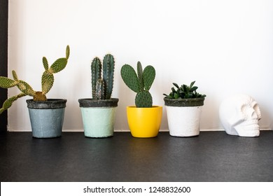 series of pots with cactus plants with a Mexican skull close up and a white wall as a background. colorful vases and interior decoration with cactus