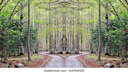 Series of symmetrical and panoramic photographs of forest landscapes, a walk in the forest, National Park Ordesa, Huesca, Spain,