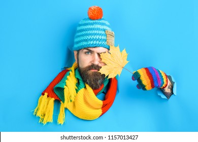 Serious bearded man hides by autumnal maple leaf in hand. Bearded man in colorful hat look through paper and holds autumn leaf. Autumn mood. Autumn time. Isolated. Sales. Discount.