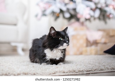 serious black cat with white spots and green eyes