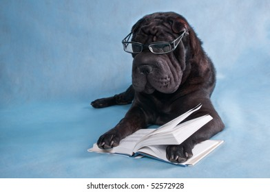 Serious Black Dog With Glasses Reading a Book