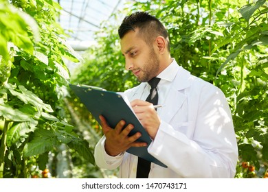Serious busy young bearded man in lab coat standing in hothouse and checking notes about plants in clipboard
