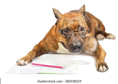 Serious dog with glasses is holding in his teeth a magnifying glass looking at a notebook with obscure formulas